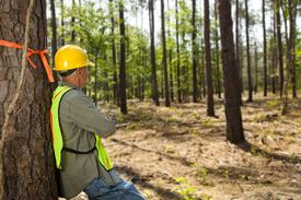 Forester worker leaning against a marked tree in a forest