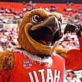 University of Utah Mascot Swoop