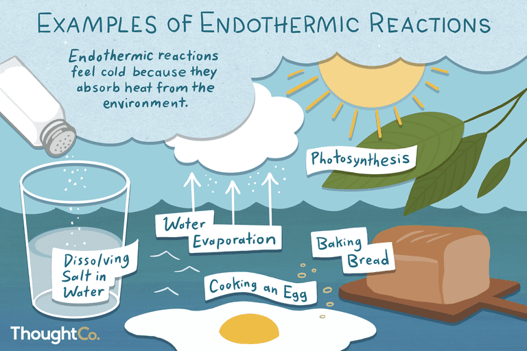 Examples of endothermic reactions: dissolving salt in water, photosynthesis, water evaporation, cooking an egg, baking bread.