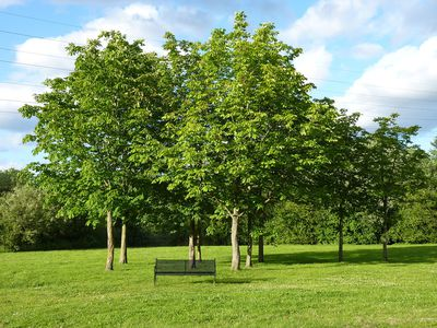 Image result for Two trees can create enough oxygen for a family of four.