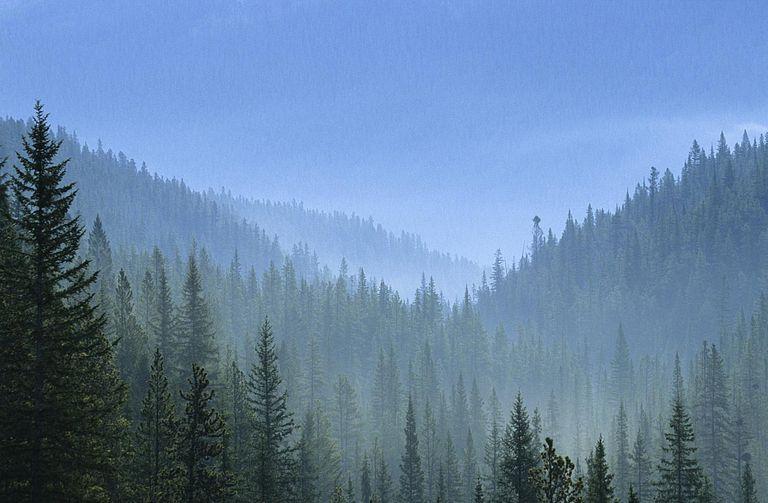 Boreal Forest (Taiga) in Canada