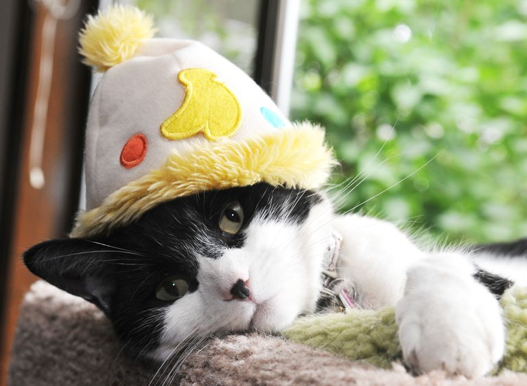 A cat wearing a hat