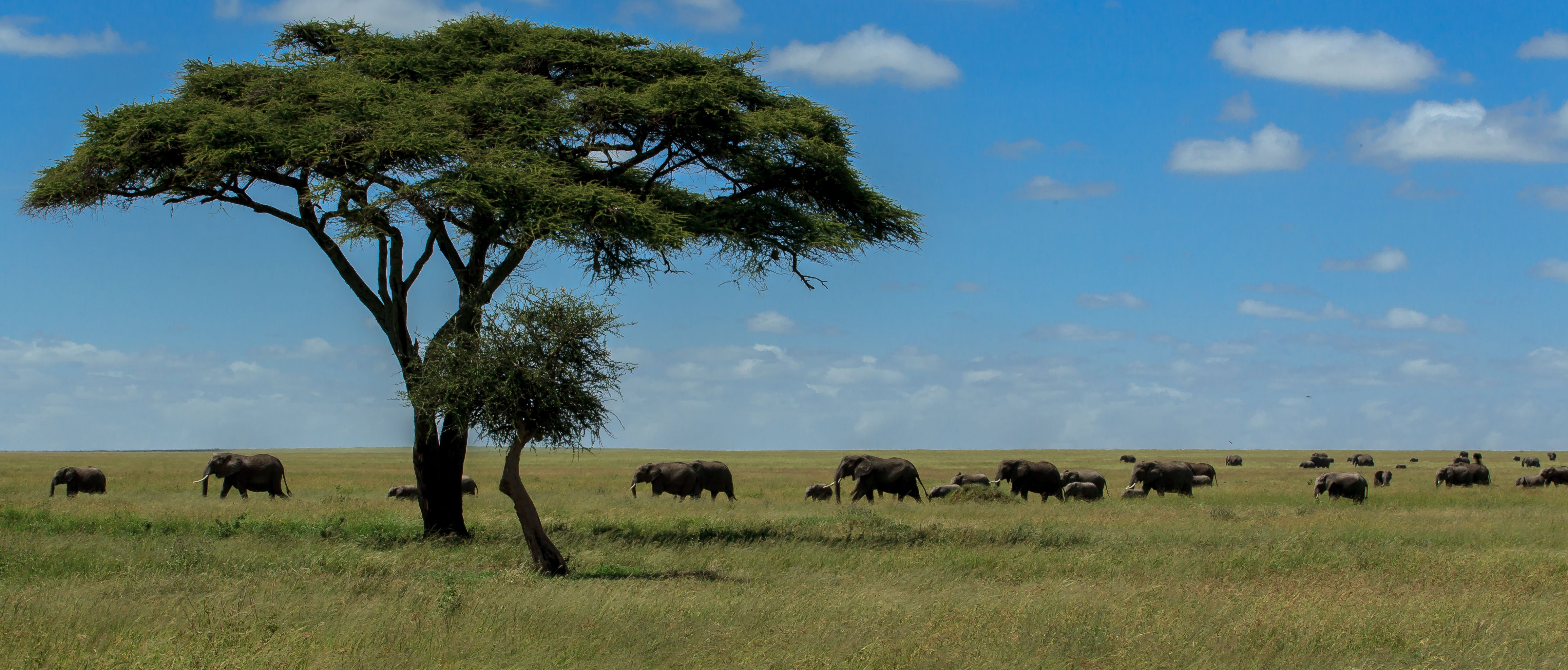 Panoramic Shot Of Elephants On Field Against Sky