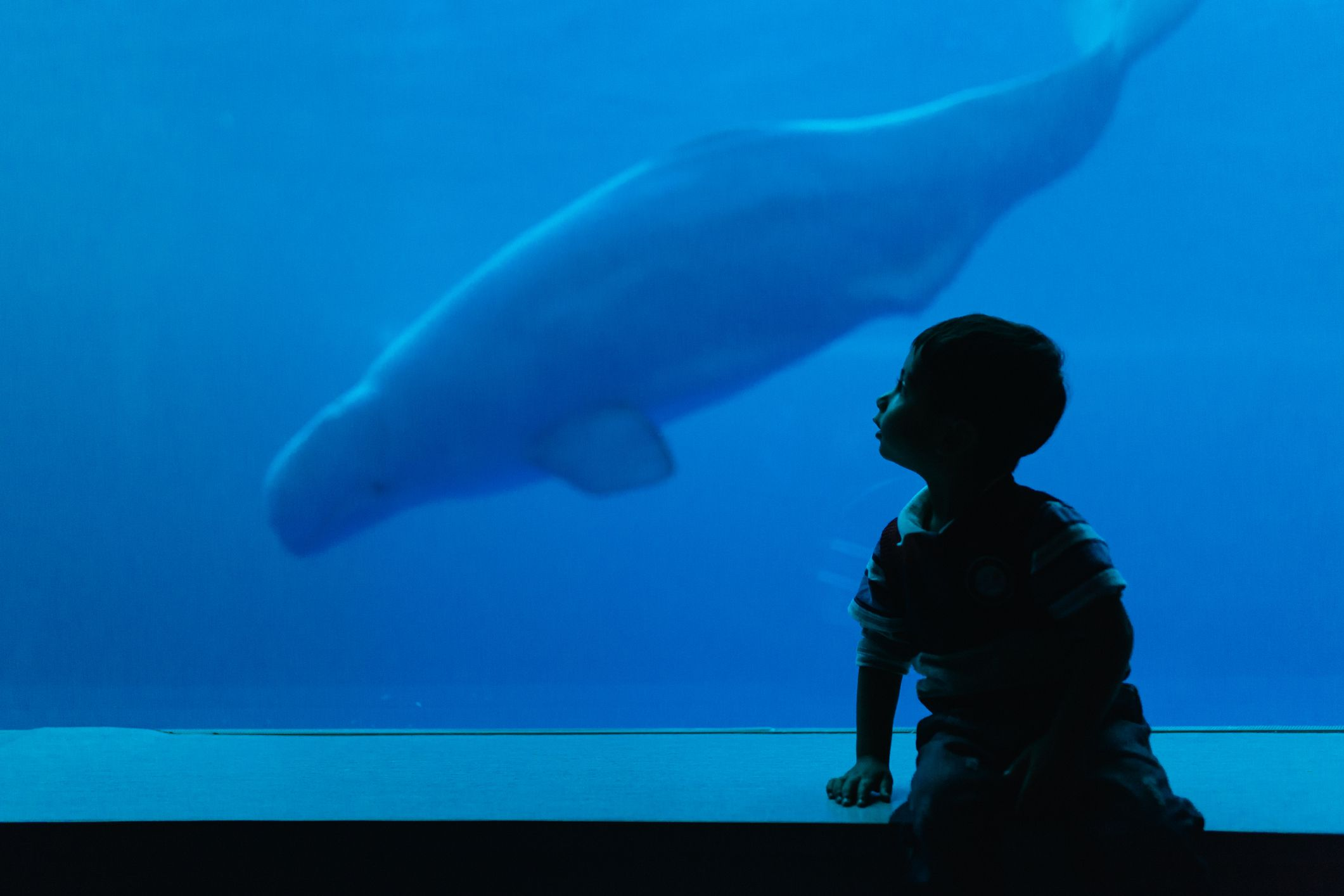 Silhouette of a child looking at dolphin in aquarium