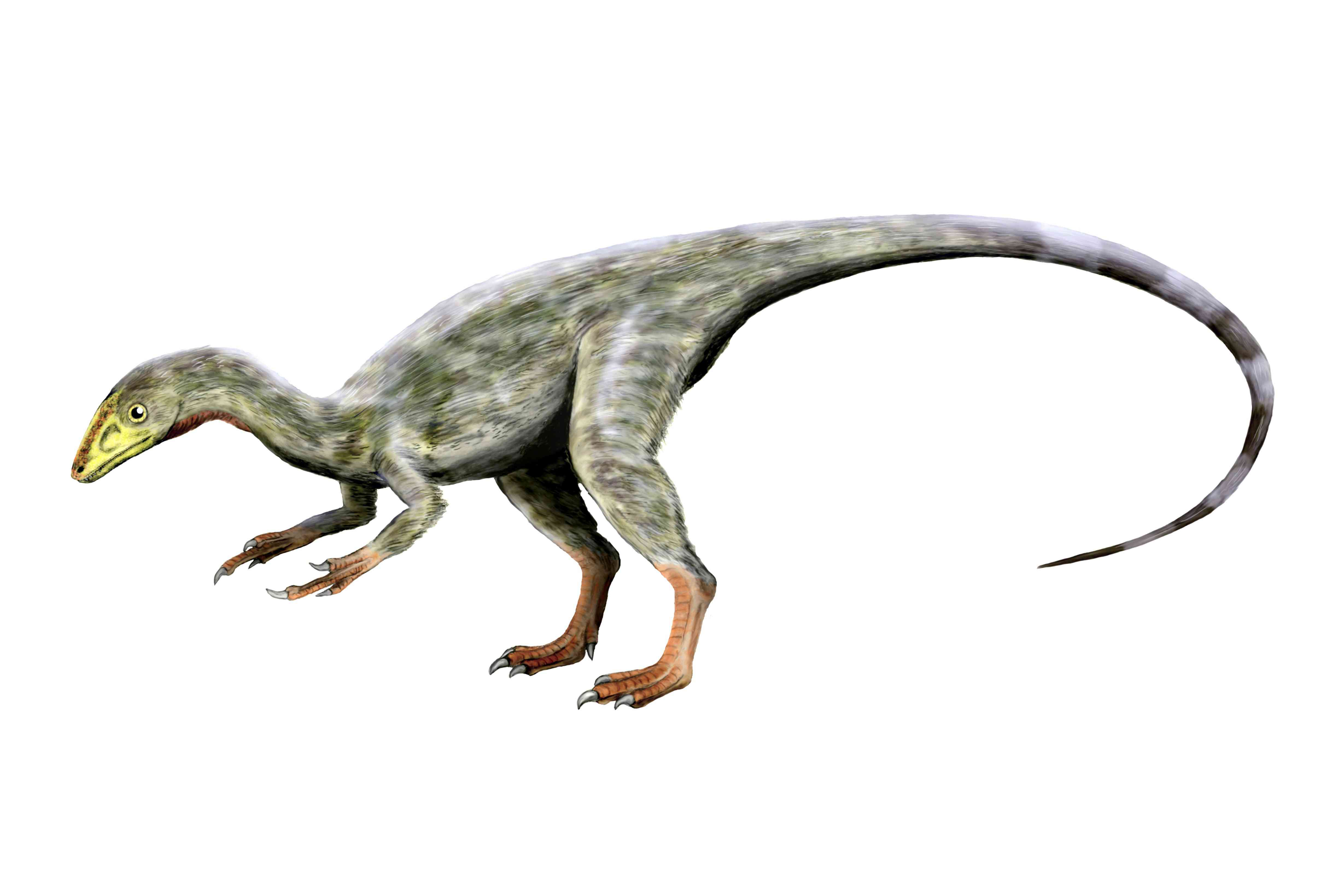 An artist rendering of a thoughtful compsognathus