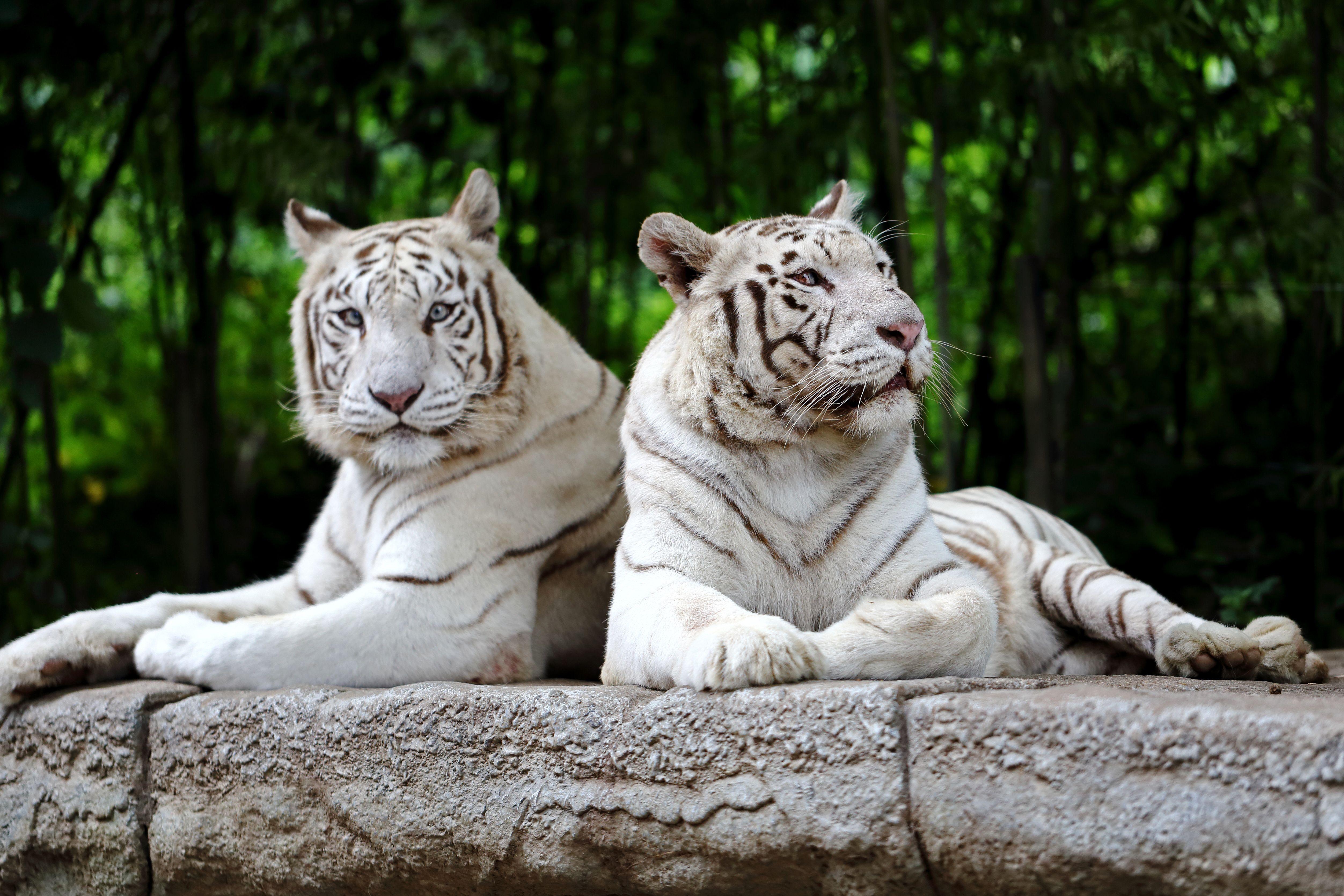 against zoos essay