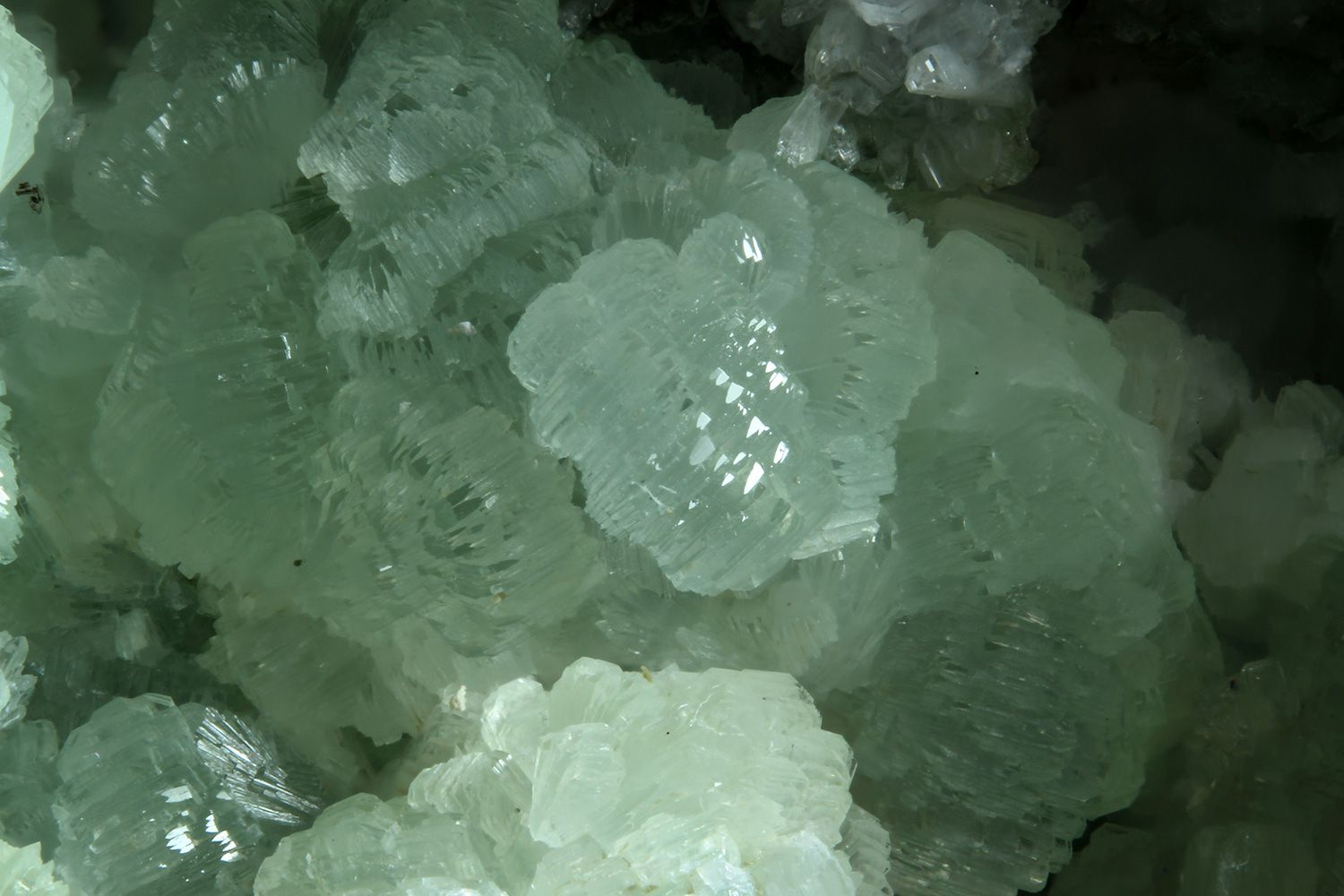 Typical botryoidal clusters of bottle-green prehnite crystals