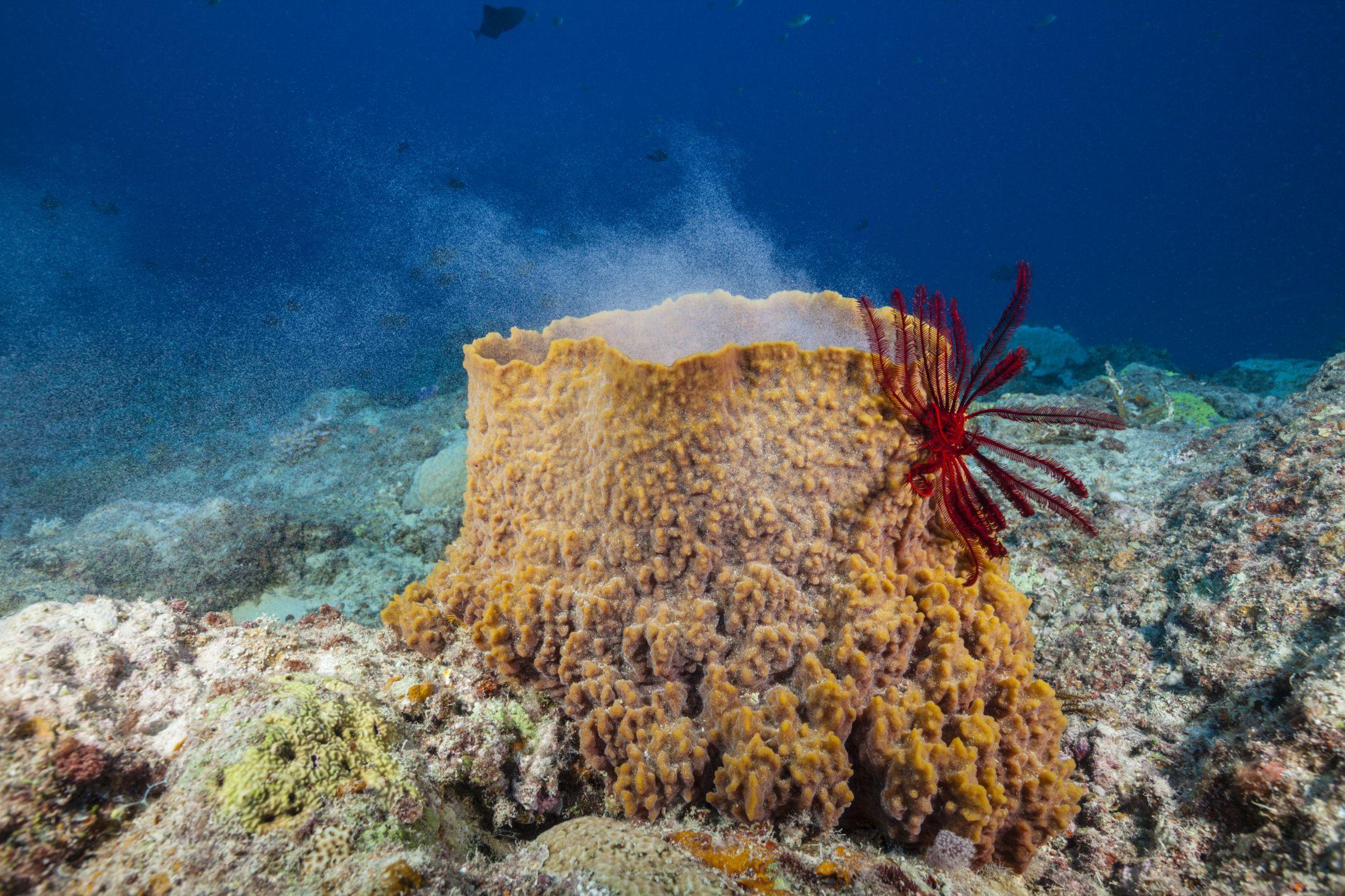 real ocean sponges - HD2125×1416
