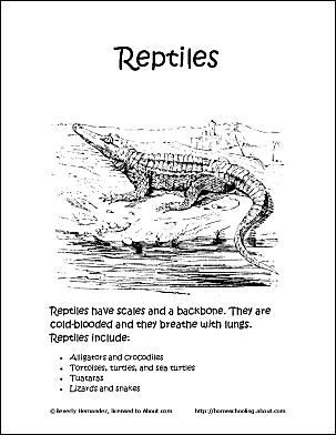reptiles coloring book ten different pages