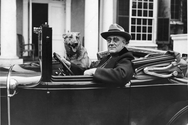 Franklin Delano Roosevelt in a car with his dog