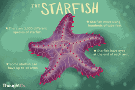 Surprising facts about starfish