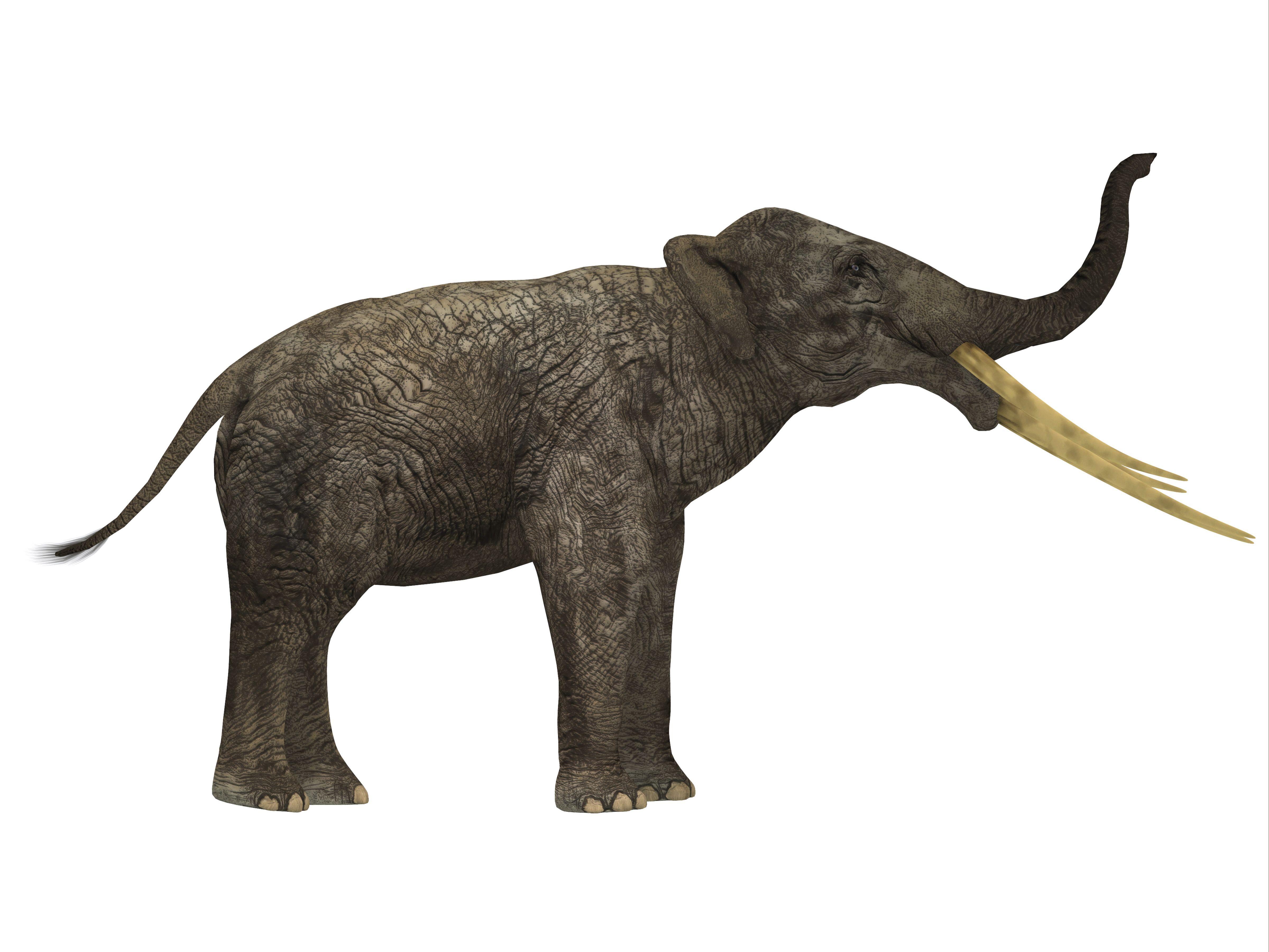 Stegotetrabelodon primitive elephant, side profile.