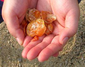 Woman holding jingle shells