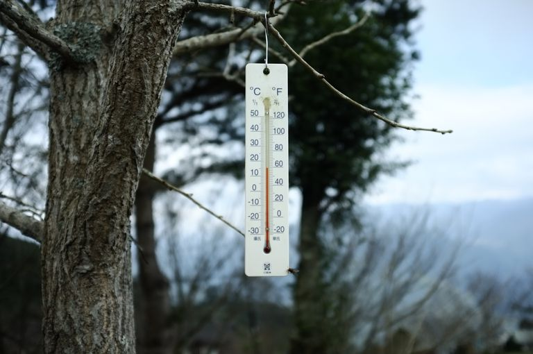 Close-Up Garden Thermometer Hanging On Tree