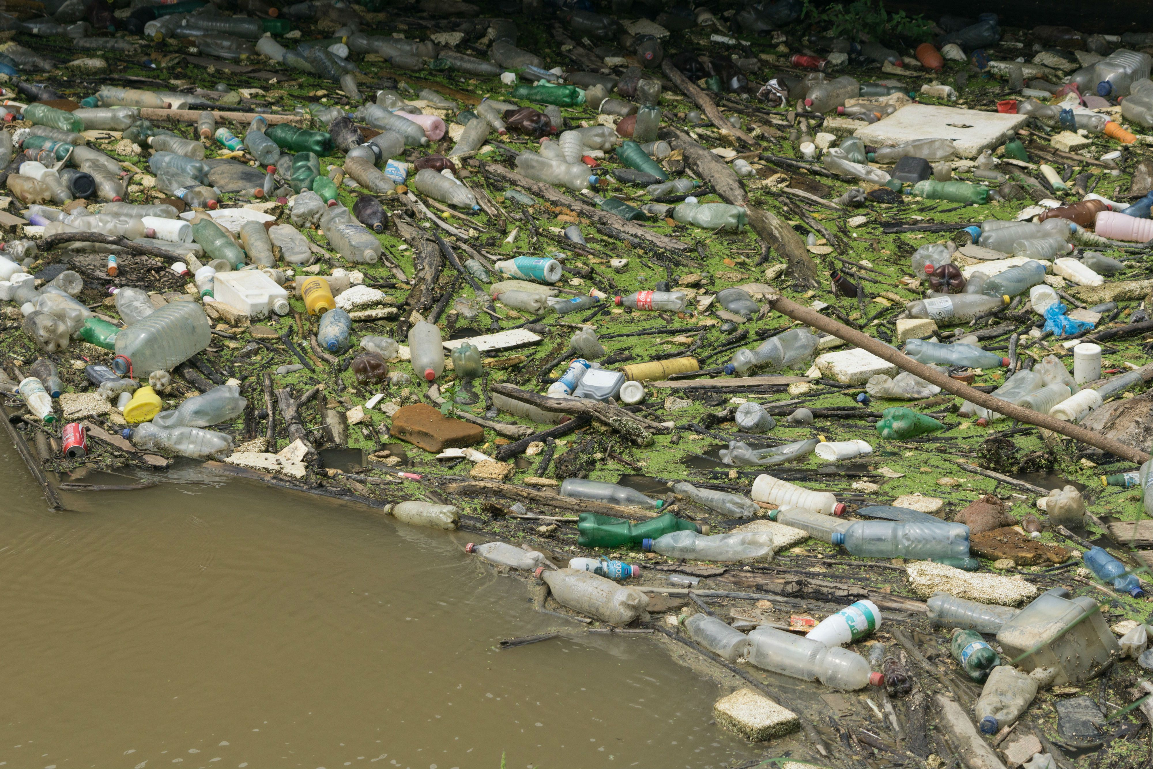 River and sea pollution essay