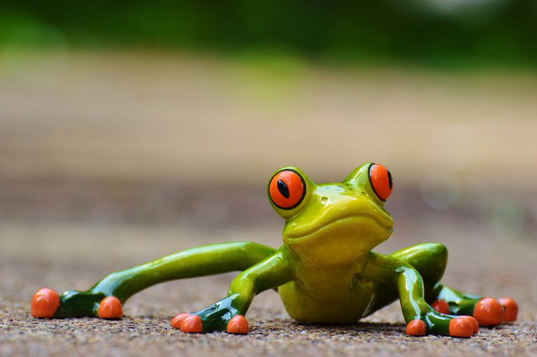 A red-eyed tree frog facing the camera.