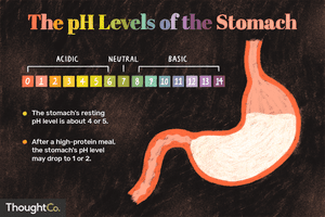 the pH levels of the stomach illustration