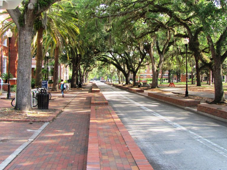 Tree-Lined Walk at the University of Florida