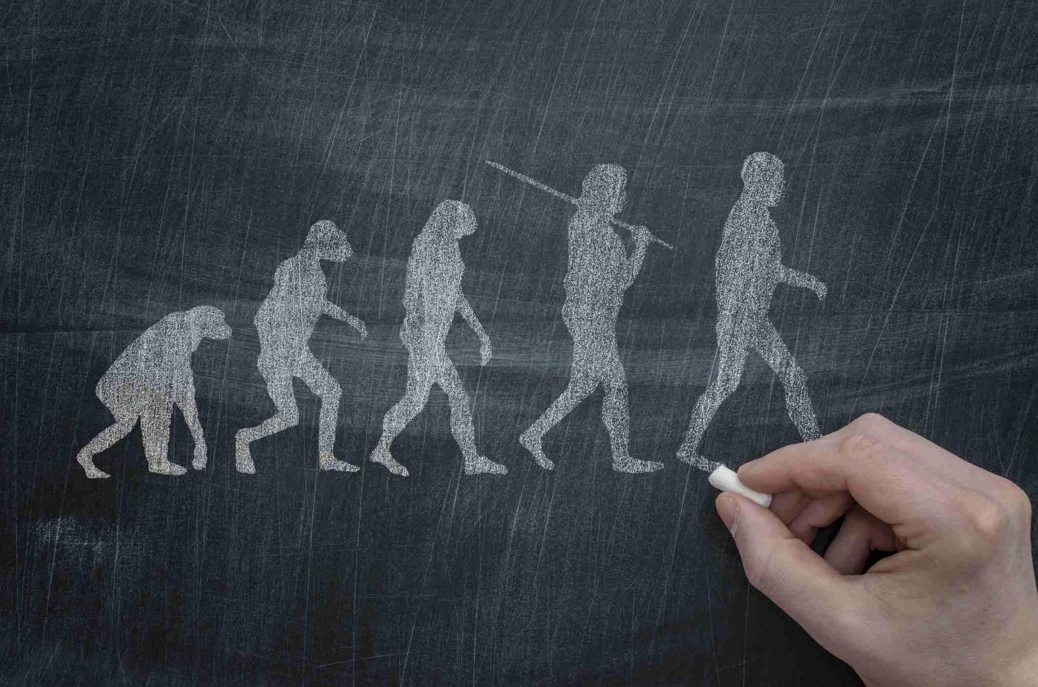 Human evolution drawn on chalkboard