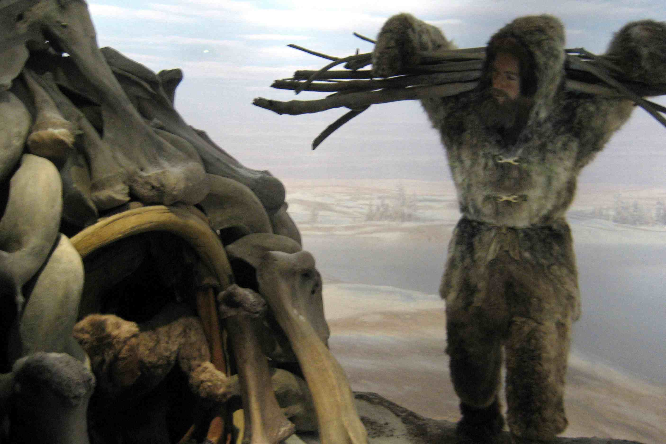 Mezhirich Ukraine (Diorama display at the American Museum of Natural History)