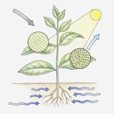 The Balanced Chemical Equation For Photosynthesis
