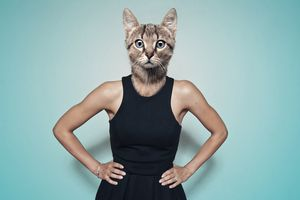 A person morphed with a cat head on a human body