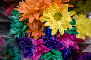Dyed daisies