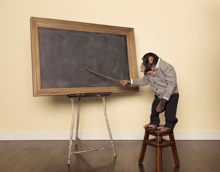 Chimpanzee Professor at the Chalkboard