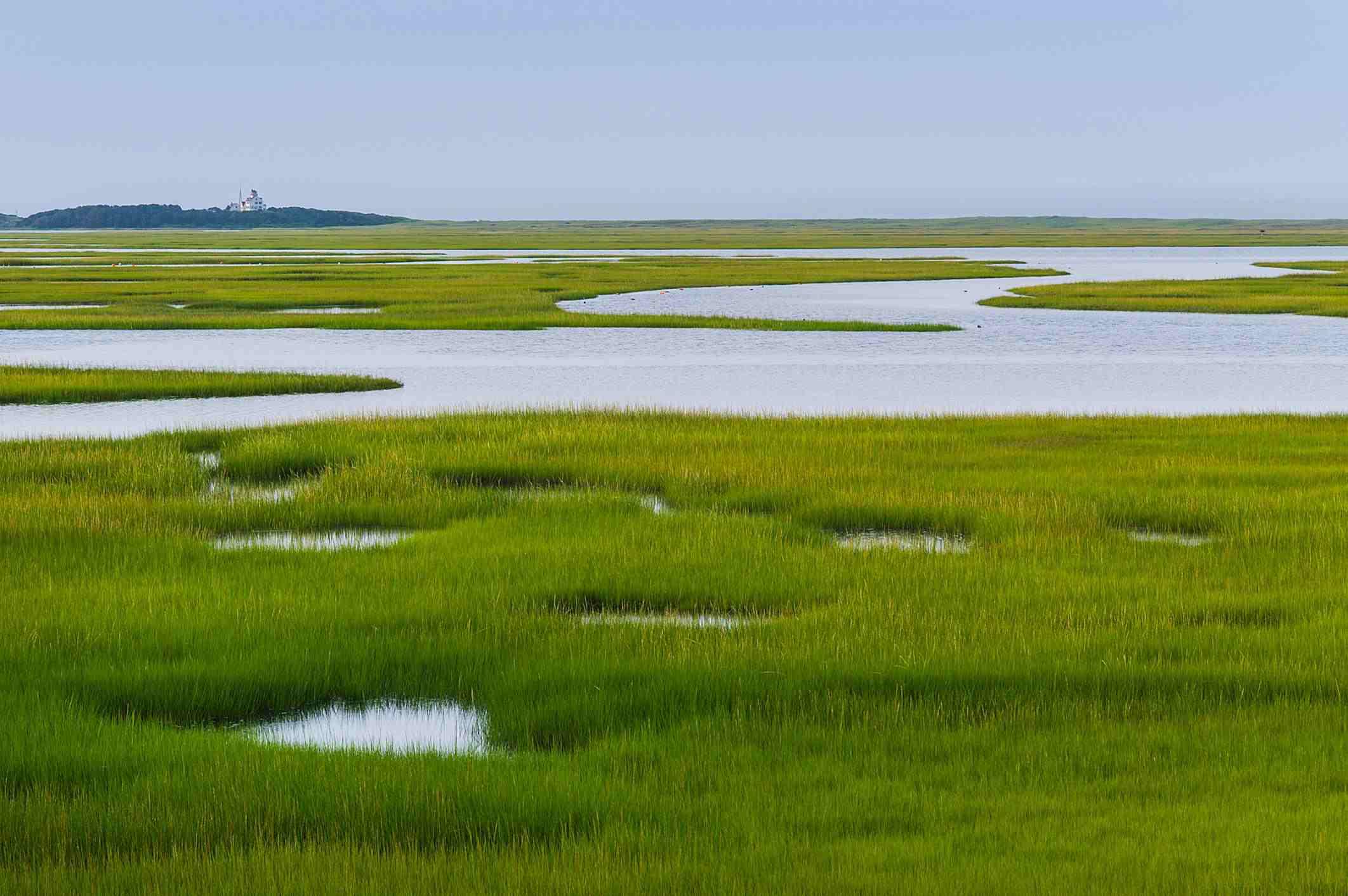 Salt Marsh in Cape Cod, Massachusetts on a gray day.