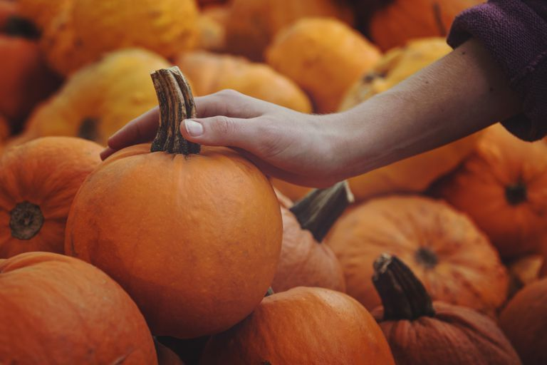 Hand reaching to grab a pumpkin from a large pile.
