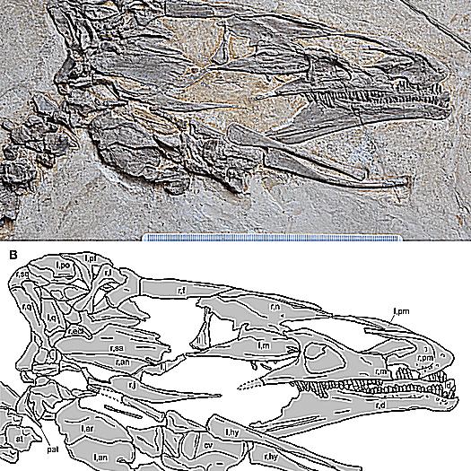 jianchangosaurus