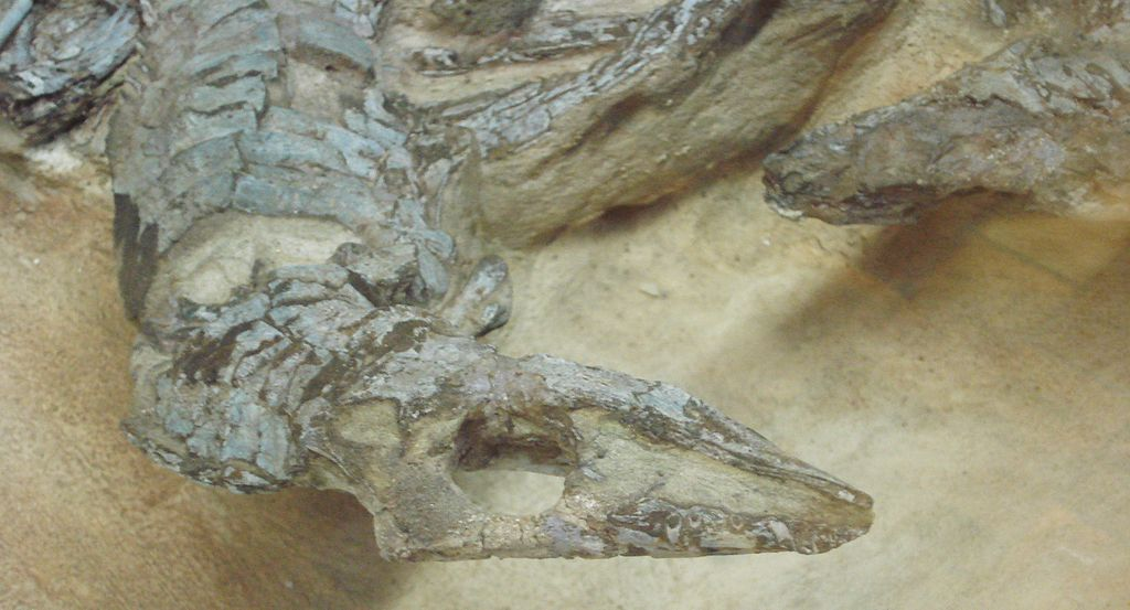 aetosaurus