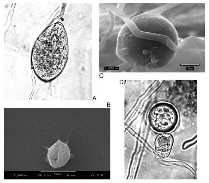 Spores creating new offspring asexually
