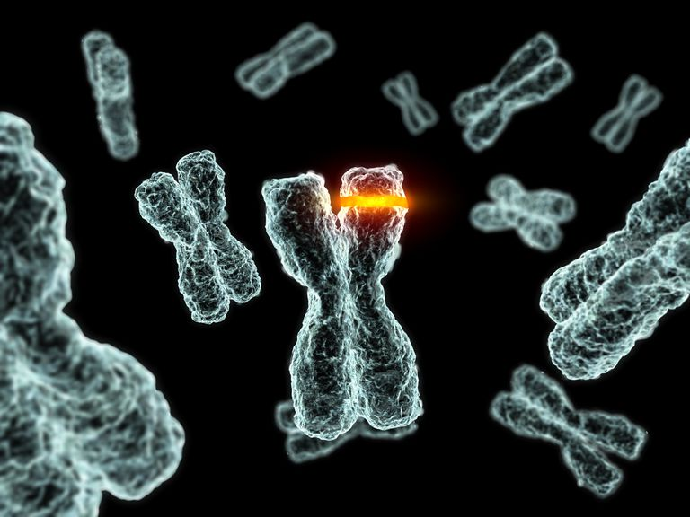 chromosomes with allele highlighted