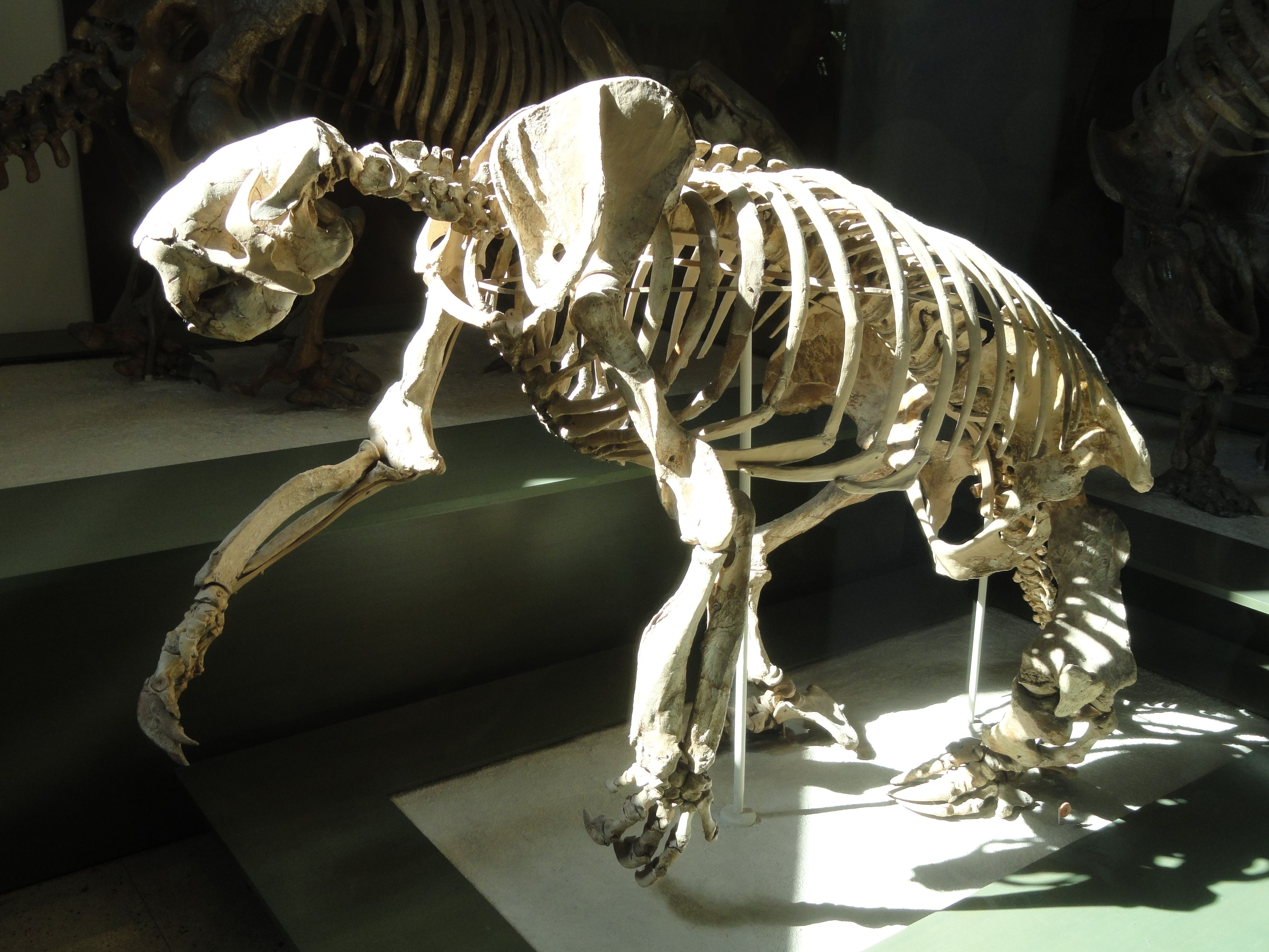 Magalonyx skeleton