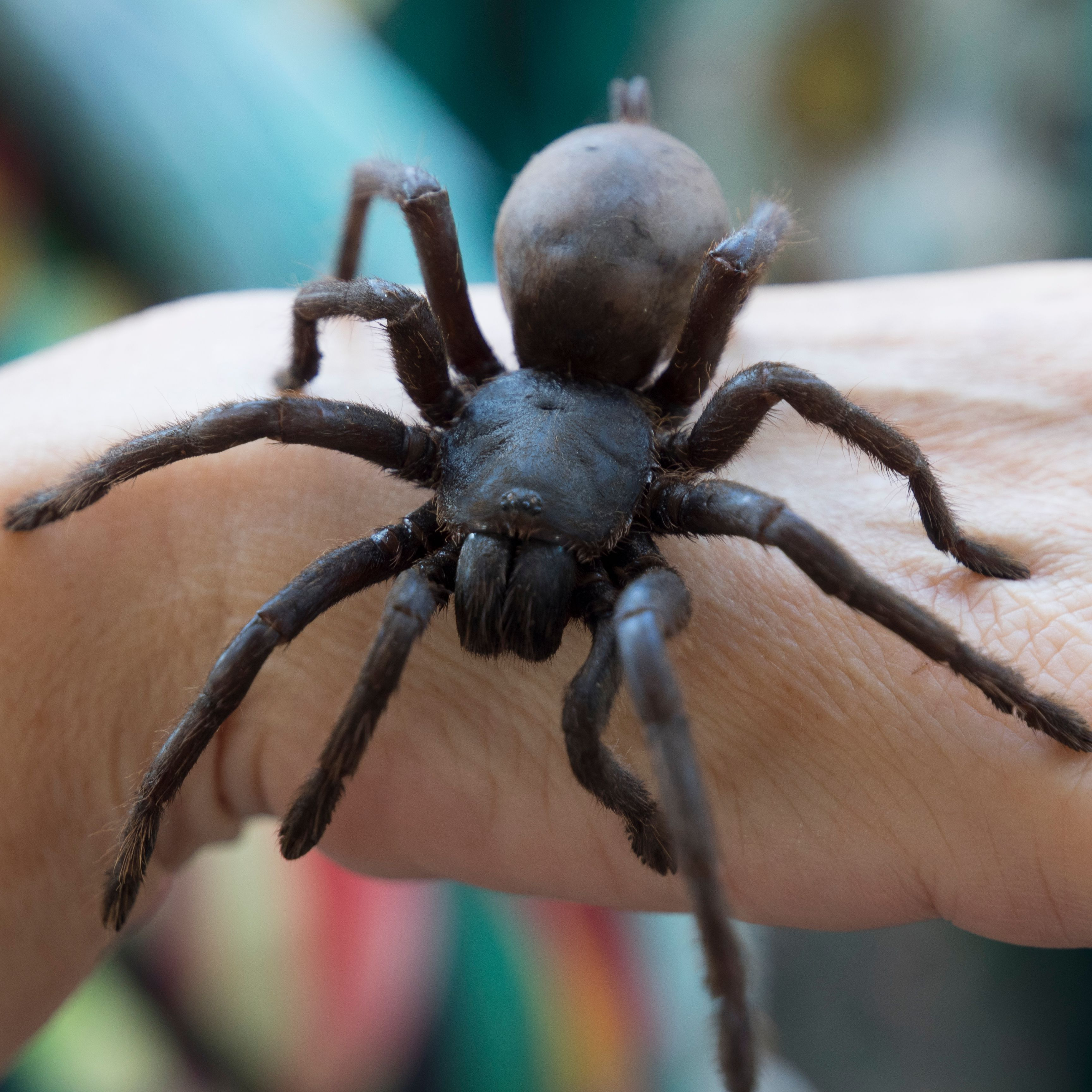 10 Biggest Spiders in the World