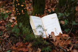 A book in the forest