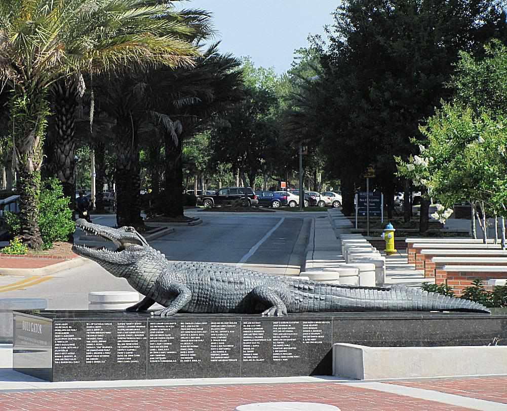 Bull Gator at the University of Florida