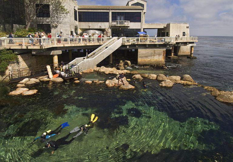 Scuba Diving Certification Agencies Compared