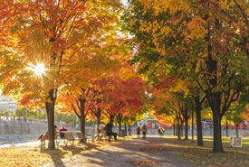 People in park in autumn