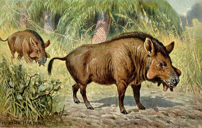 Entelodon (Killer Pig) - Facts and Figures