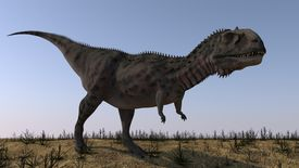Majungasaurus in a barren environment.