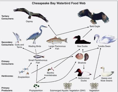 Understanding The Arctic Food Web 1140785 on Tundra Food Chain Pictures