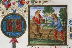 Month of September,farmer plowing with mule,miniature from Ercole I d'Este Brevary,lat manuscript CCCCXXIV,folio 5,recto,parchment,1502-1506,Italy,16th century