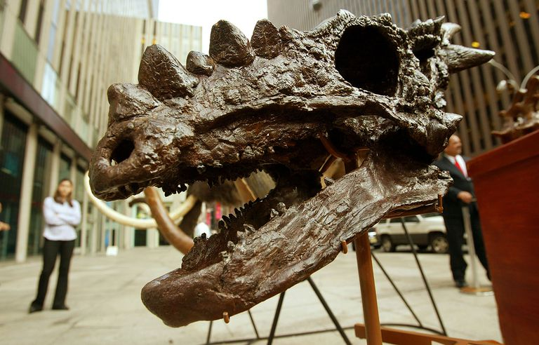 Dinosaurs Fossils Placed On The Auction Block