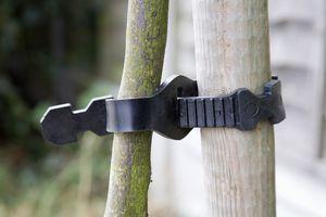 tree stake