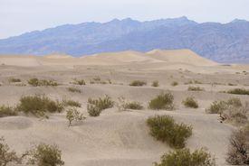 sand dunes with desert shrubbery