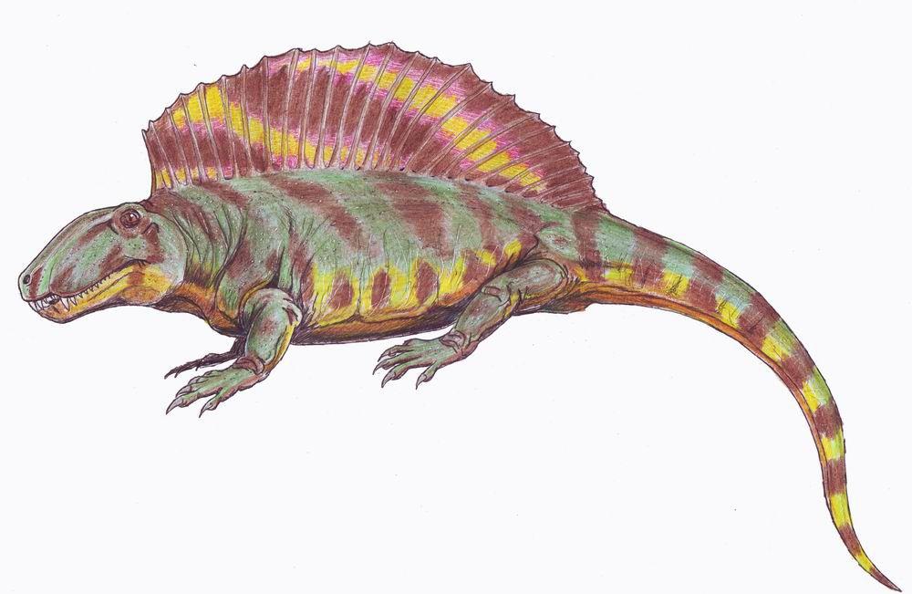 ctenospondylus