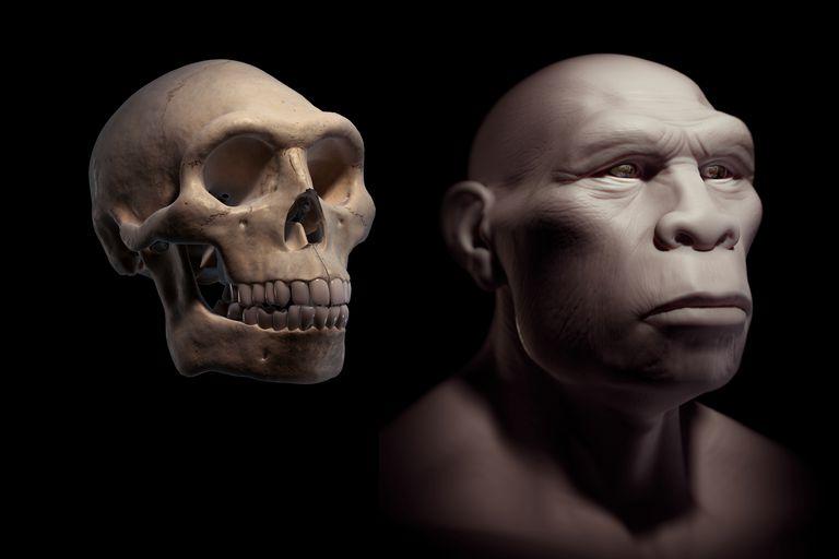 Homo Erectus with Skull