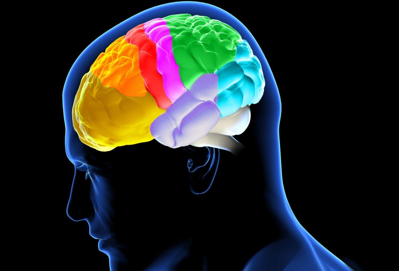 Divisions of the Brain: Forebrain, Midbrain, Hindbrain